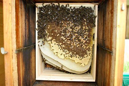 Bild für Kategorie Basiskurs naturnahe Bienenhaltung