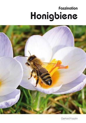 Bild von Faszination Honigbiene